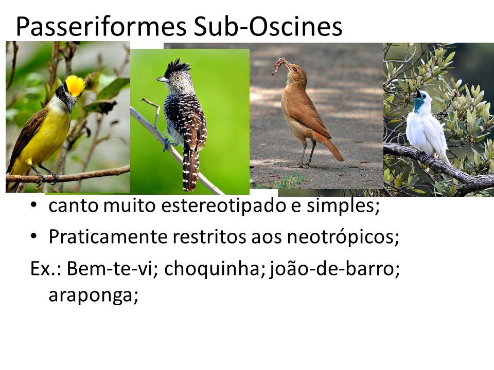 Passeriformes Sub-Oscines