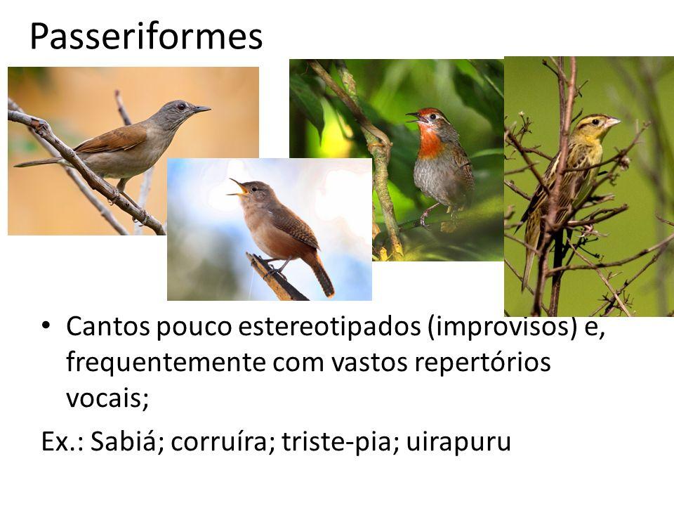 Passeriformes Cantos pouco estereotipados (improvisos) e, frequentemente com vastos repertórios vocais;