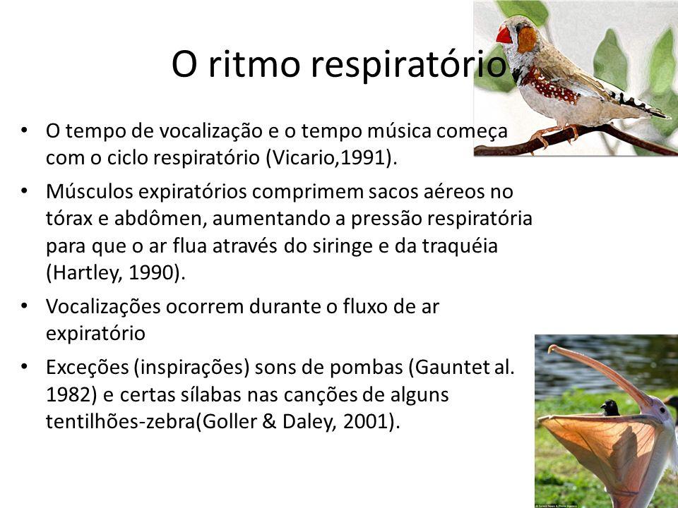 O ritmo respiratório O tempo de vocalização e o tempo música começa com o ciclo respiratório (Vicario,1991).