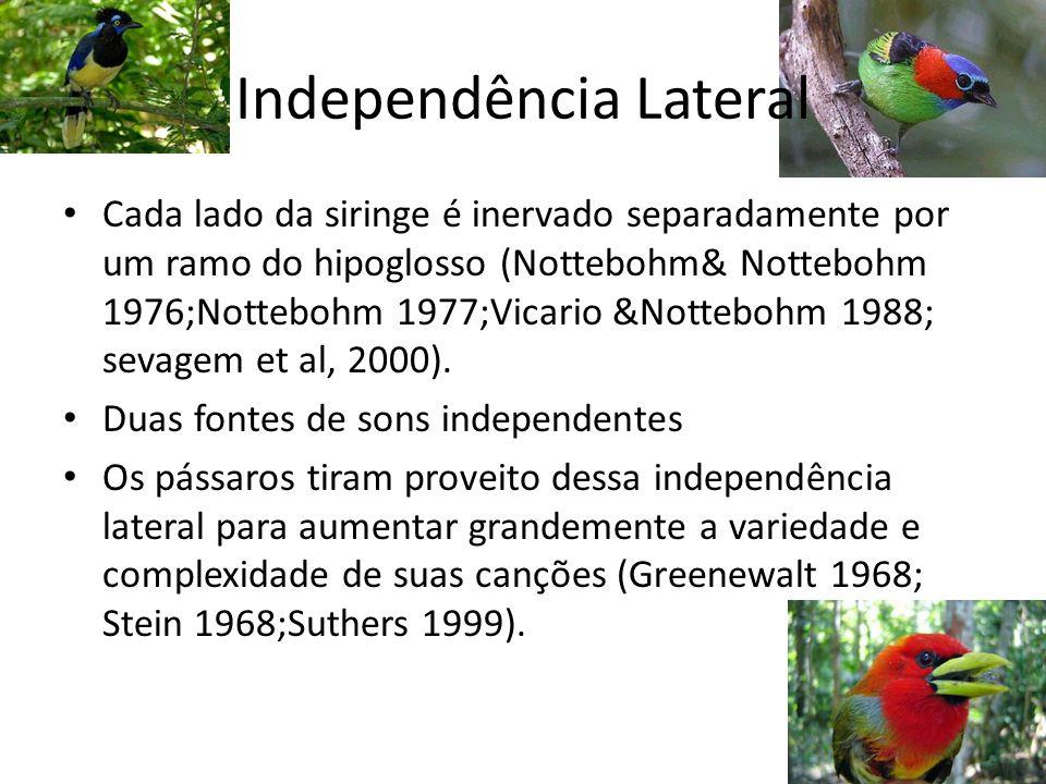 Independência Lateral
