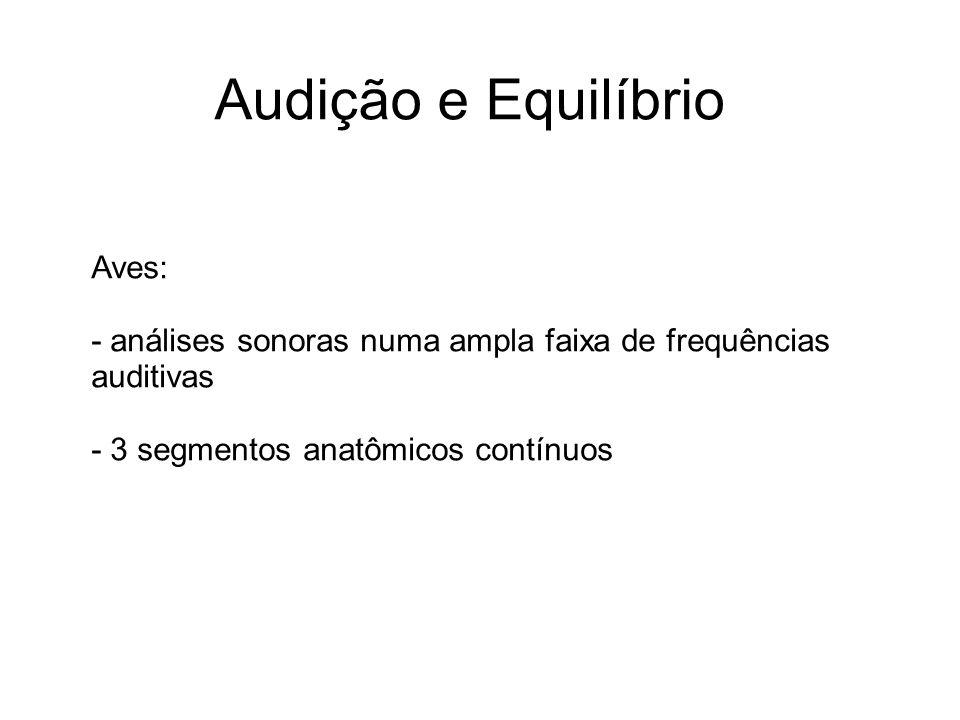 Audição e Equilíbrio Aves: