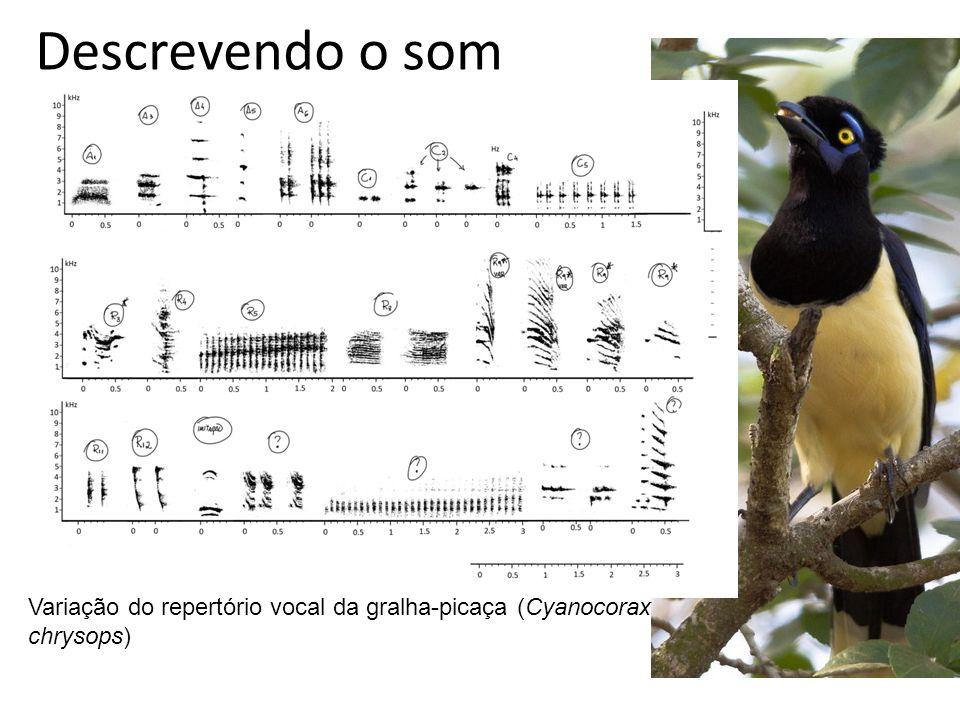 Descrevendo o som Variação do repertório vocal da gralha-picaça (Cyanocorax chrysops)