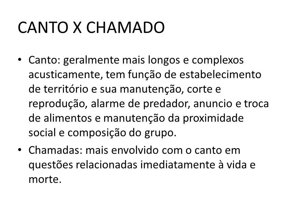 CANTO X CHAMADO