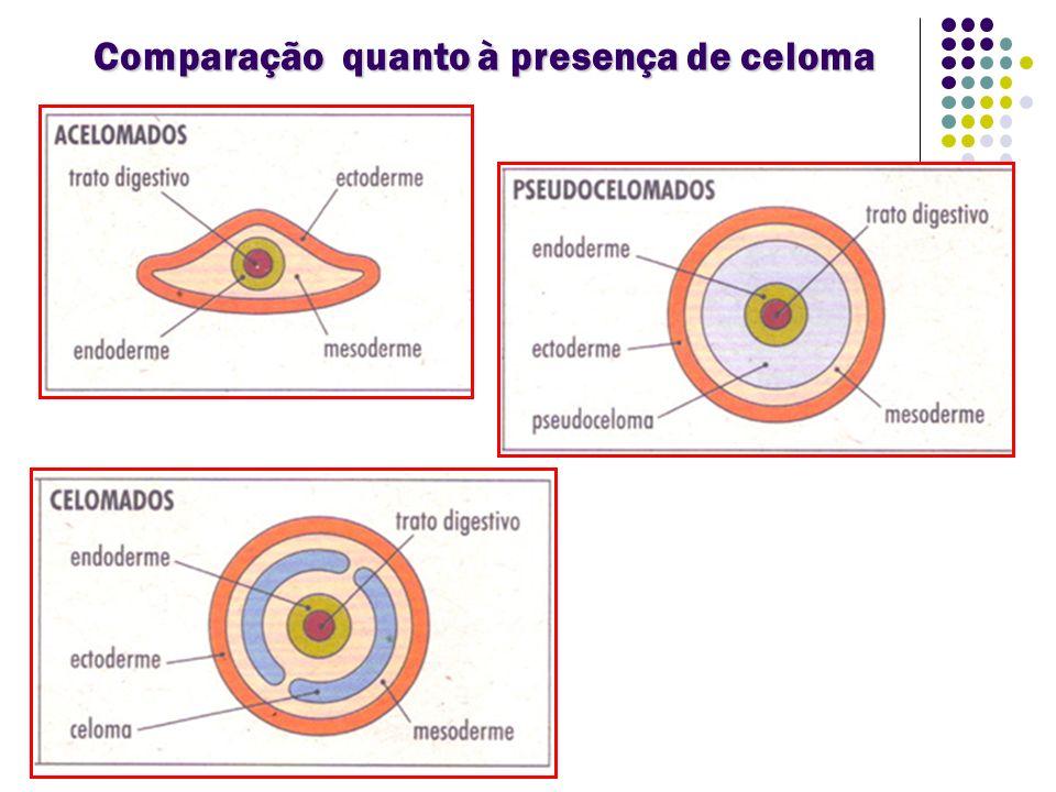 Comparação quanto à presença de celoma