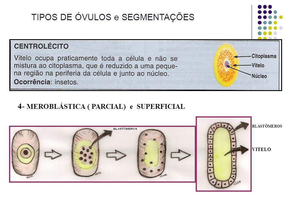 TIPOS DE ÓVULOS e SEGMENTAÇÕES