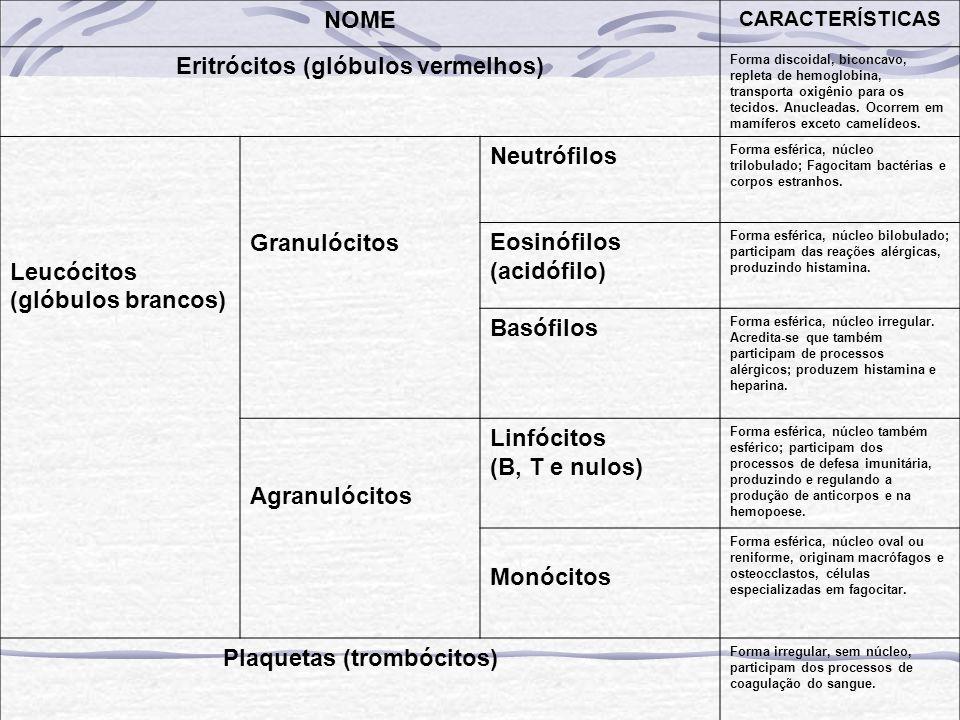 Eritrócitos (glóbulos vermelhos) Plaquetas (trombócitos)