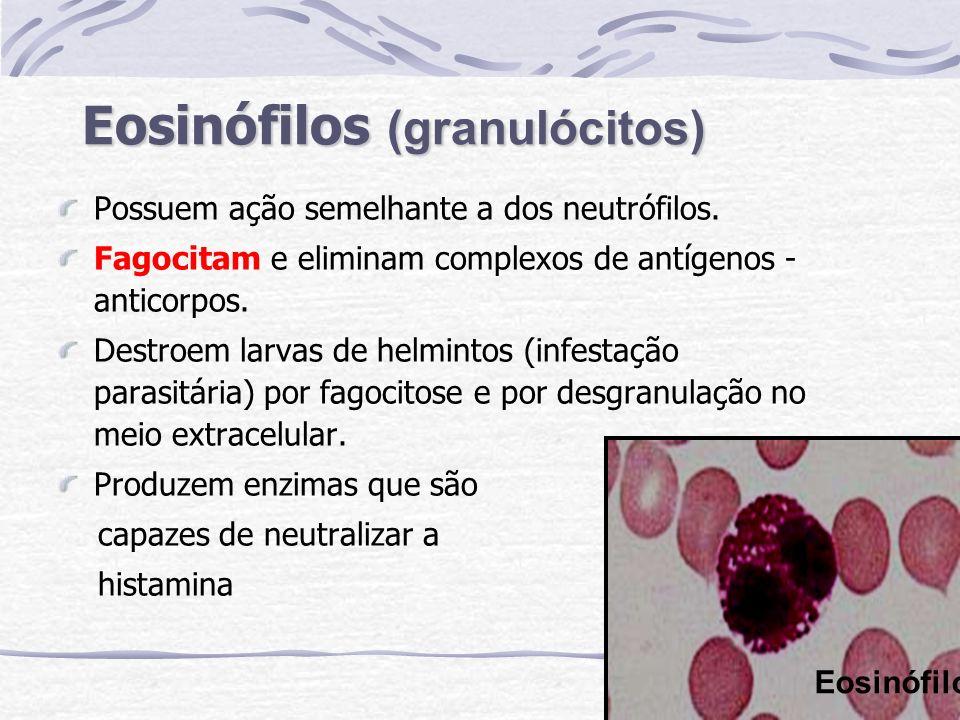 Eosinófilos (granulócitos)