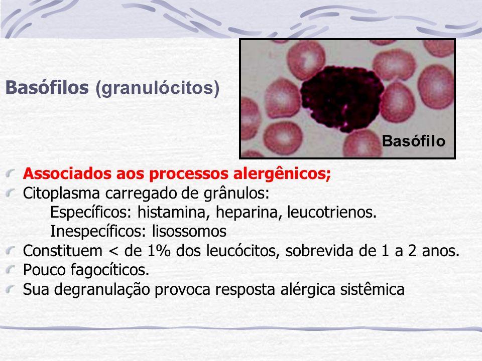 Basófilos (granulócitos)
