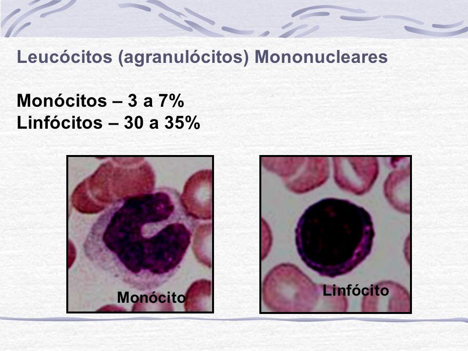 Leucócitos (agranulócitos) Mononucleares Monócitos – 3 a 7%