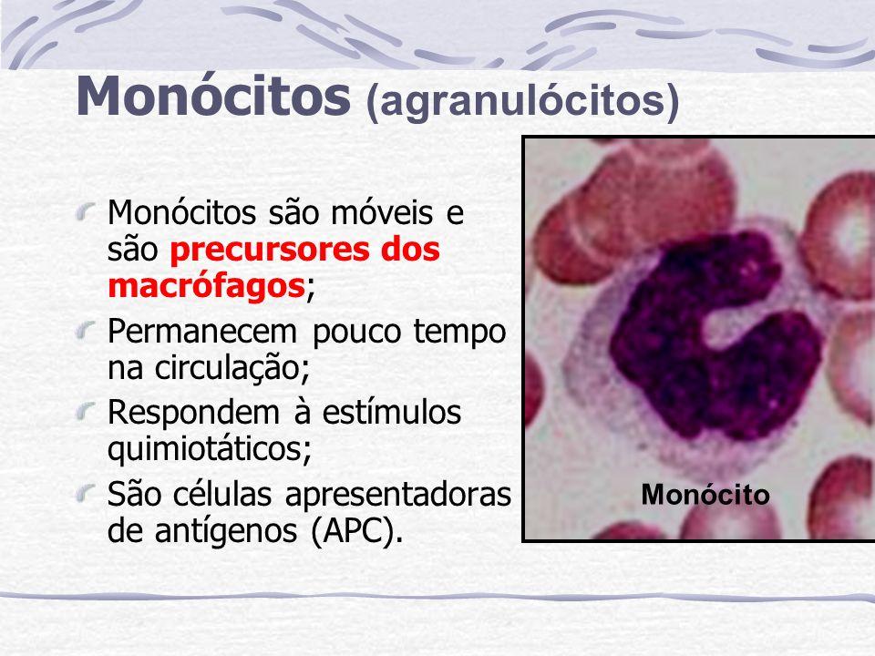 Monócitos (agranulócitos)