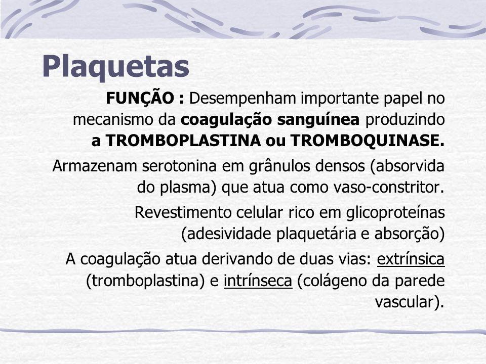 Plaquetas FUNÇÃO : Desempenham importante papel no mecanismo da coagulação sanguínea produzindo a TROMBOPLASTINA ou TROMBOQUINASE.