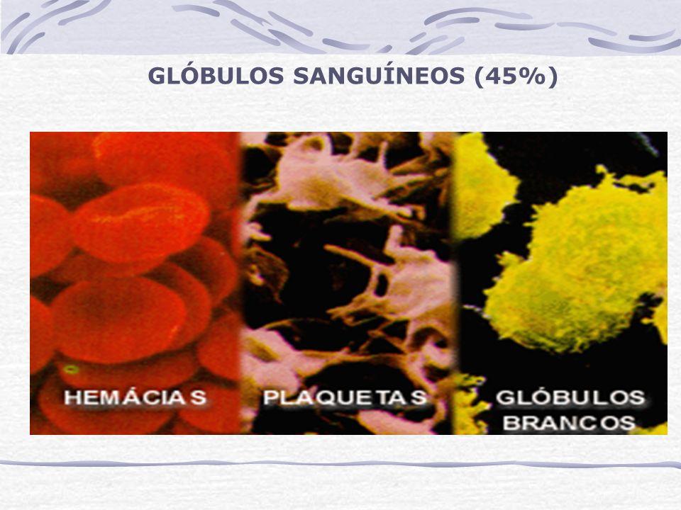 GLÓBULOS SANGUÍNEOS (45%)