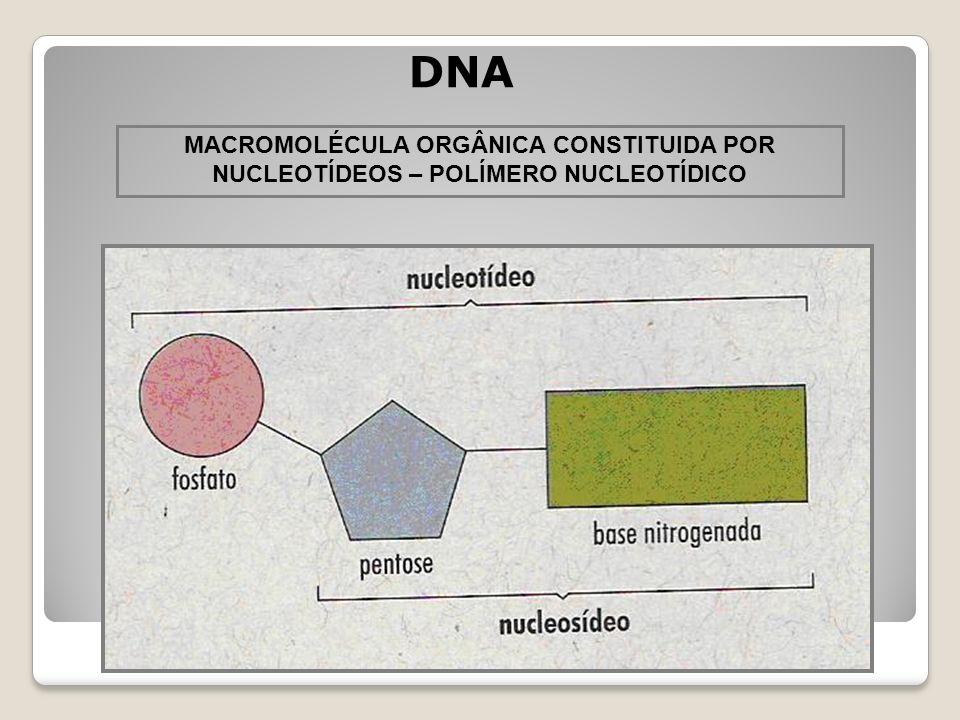 DNA MACROMOLÉCULA ORGÂNICA CONSTITUIDA POR NUCLEOTÍDEOS – POLÍMERO NUCLEOTÍDICO