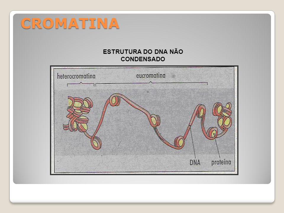 ESTRUTURA DO DNA NÃO CONDENSADO