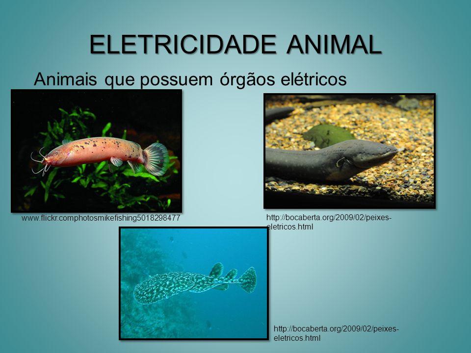 ELETRICIDADE ANIMAL Animais que possuem órgãos elétricos