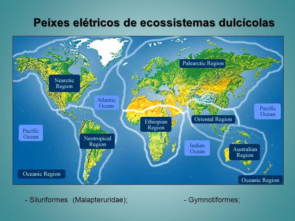 Peixes elétricos de ecossistemas dulcícolas