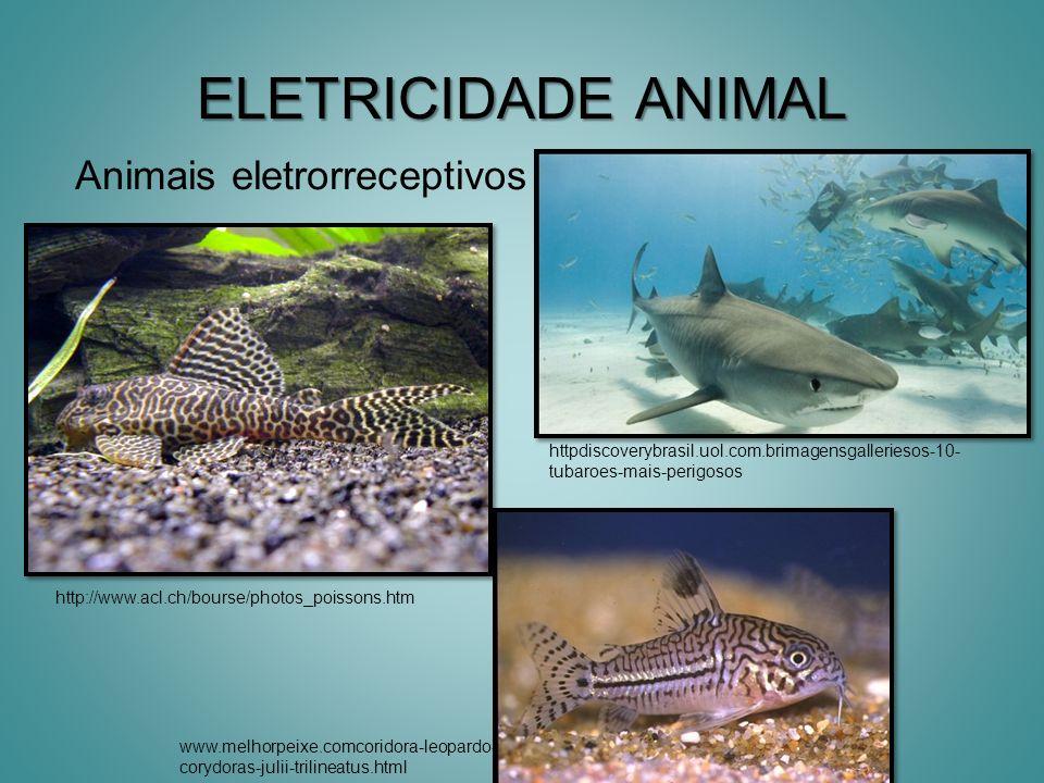 ELETRICIDADE ANIMAL Animais eletrorreceptivos