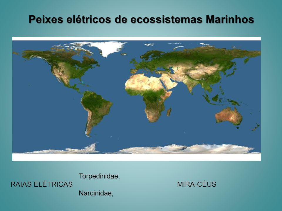 Peixes elétricos de ecossistemas Marinhos