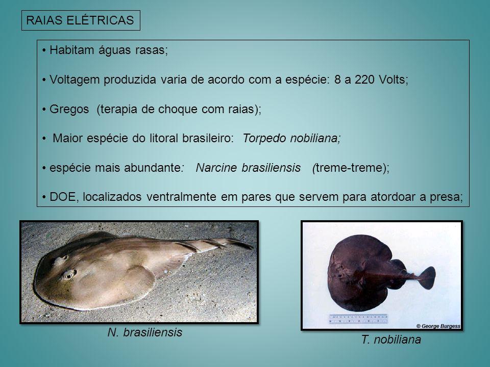 RAIAS ELÉTRICAS Habitam águas rasas; Voltagem produzida varia de acordo com a espécie: 8 a 220 Volts;