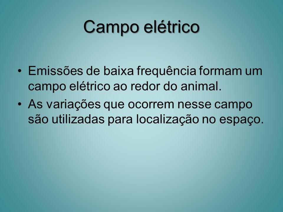 Campo elétrico Emissões de baixa frequência formam um campo elétrico ao redor do animal.