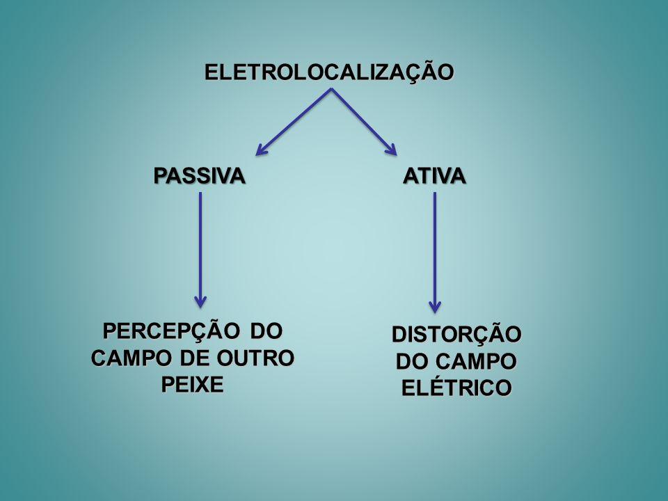 PERCEPÇÃO DO CAMPO DE OUTRO PEIXE DISTORÇÃO DO CAMPO ELÉTRICO