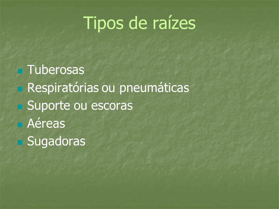 Tipos de raízes Tuberosas Respiratórias ou pneumáticas