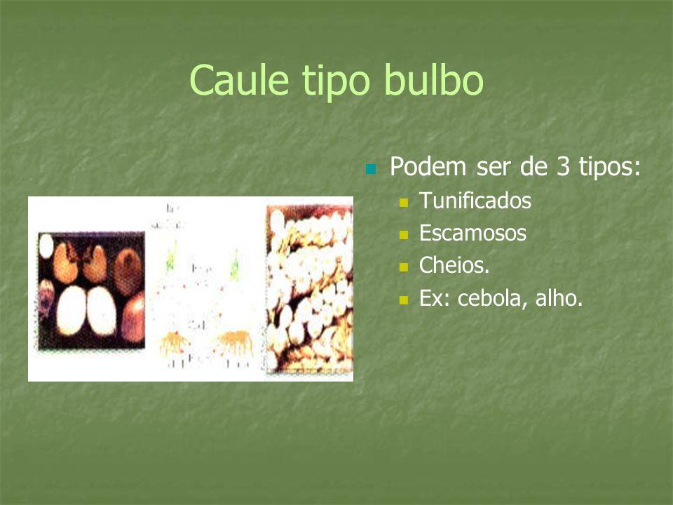 Caule tipo bulbo Podem ser de 3 tipos: Tunificados Escamosos Cheios.