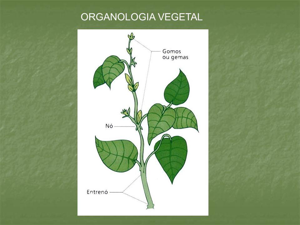 ORGANOLOGIA VEGETAL 2