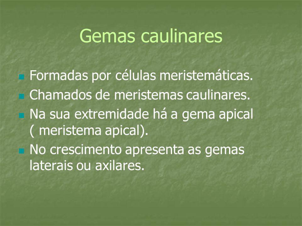 Gemas caulinares Formadas por células meristemáticas.