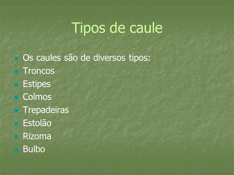 Tipos de caule Os caules são de diversos tipos: Troncos Estipes Colmos
