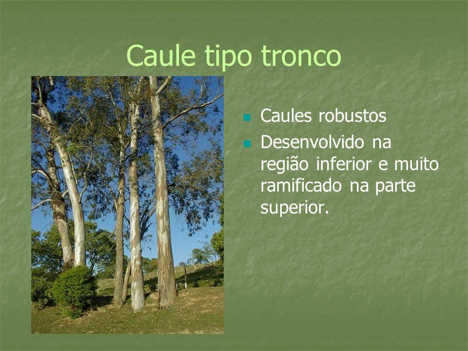 Caule tipo tronco Caules robustos