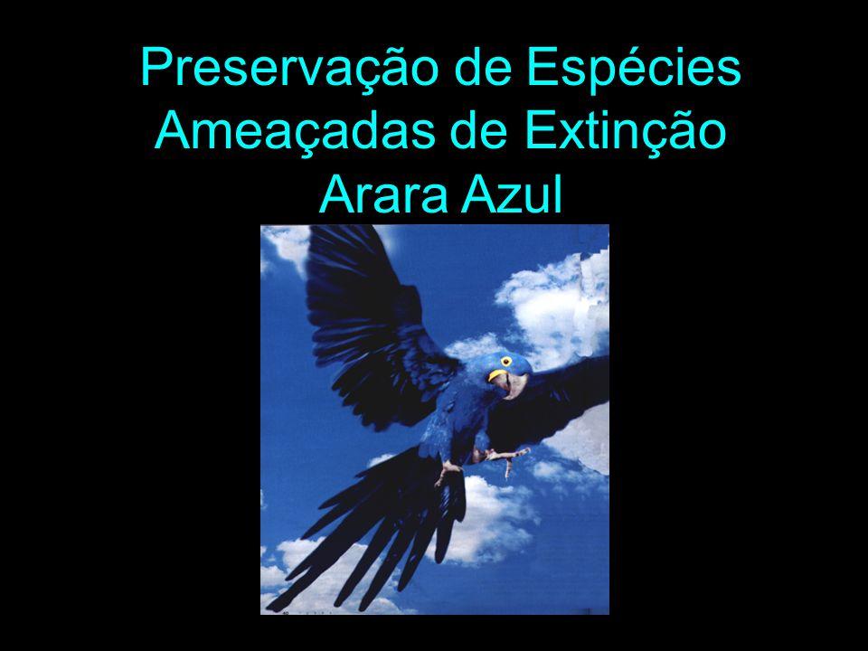 Preservação de Espécies Ameaçadas de Extinção Arara Azul