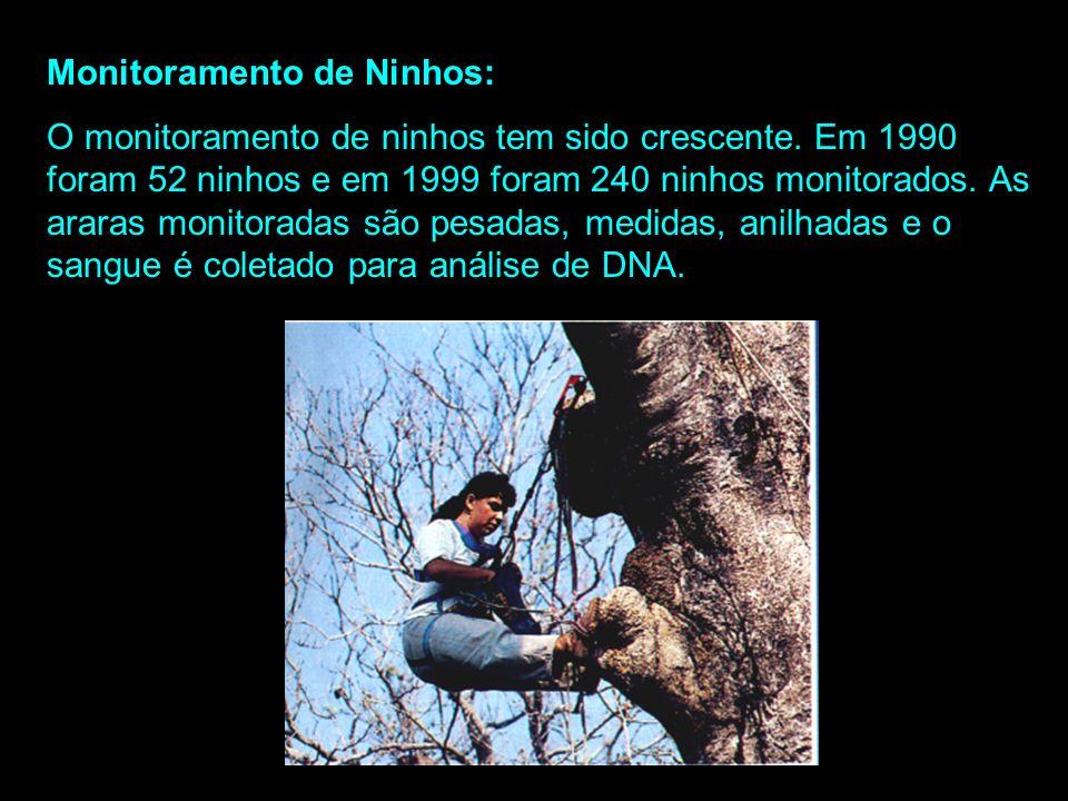 Monitoramento de Ninhos: