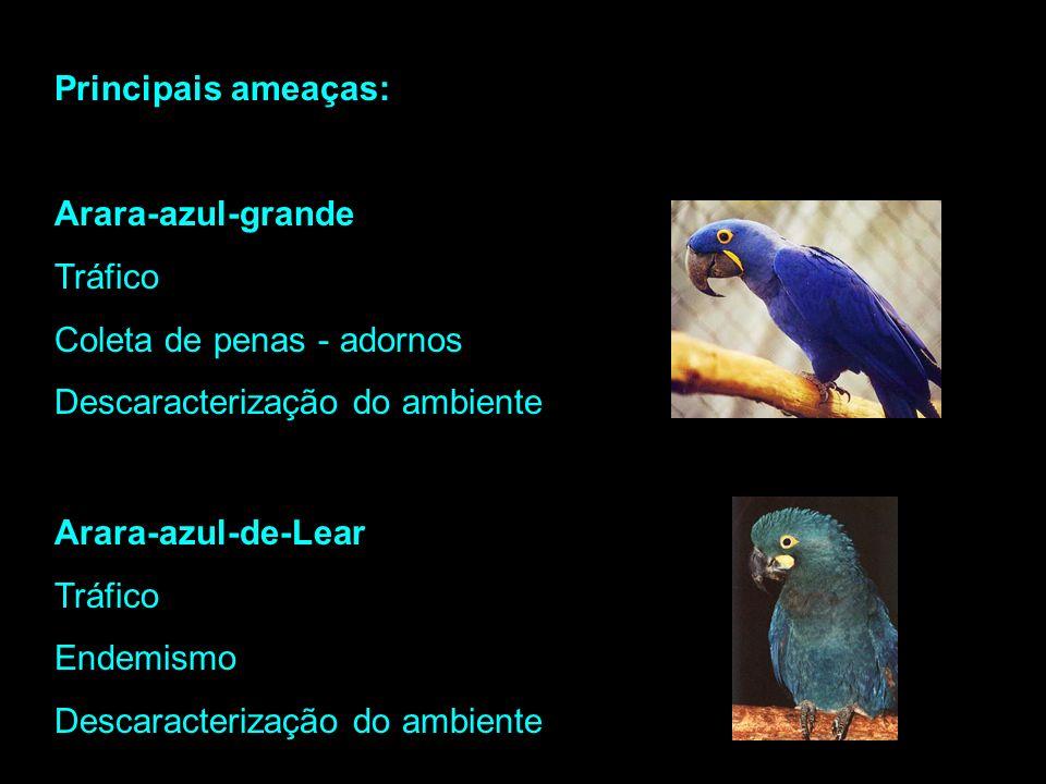 Principais ameaças: Arara-azul-grande. Tráfico. Coleta de penas - adornos. Descaracterização do ambiente.