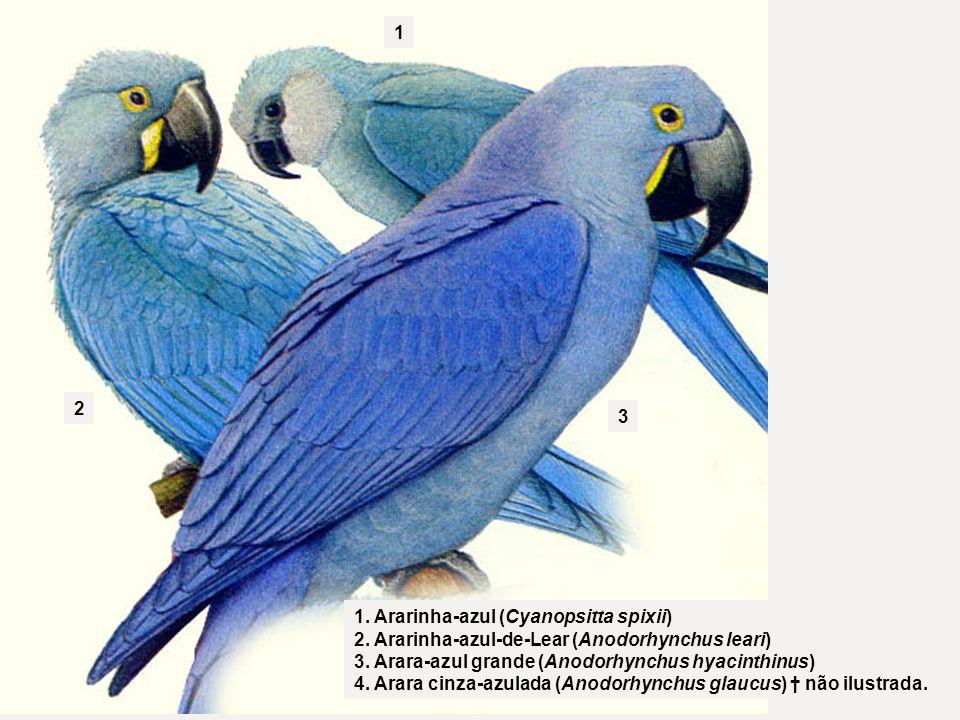 1 2. 3. 1. Ararinha-azul (Cyanopsitta spixii) 2. Ararinha-azul-de-Lear (Anodorhynchus leari) 3. Arara-azul grande (Anodorhynchus hyacinthinus)