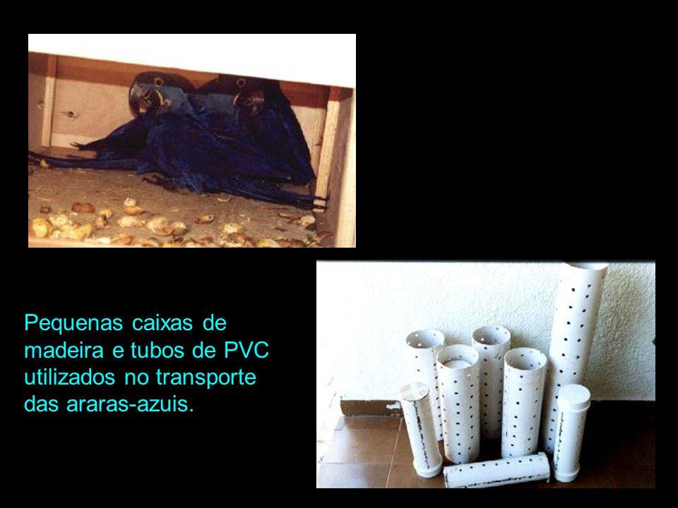 Pequenas caixas de madeira e tubos de PVC utilizados no transporte das araras-azuis.
