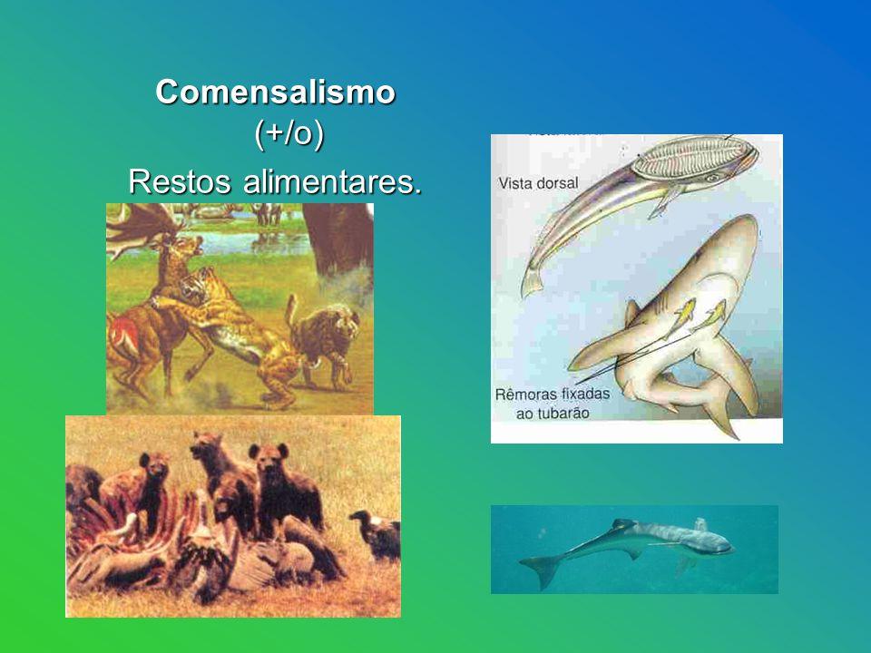 Comensalismo (+/o) Restos alimentares.