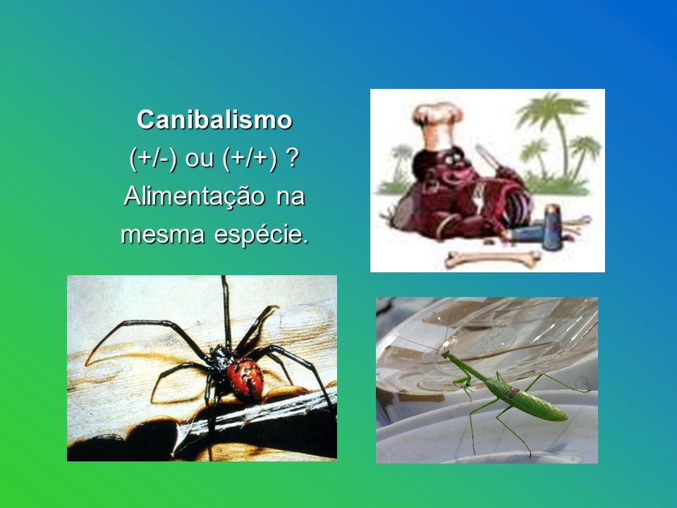 Canibalismo (+/-) ou (+/+) Alimentação na mesma espécie.