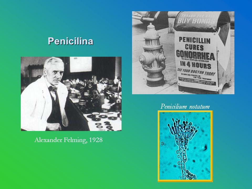 Penicilina Penicilium notatum Alexander Felming, 1928