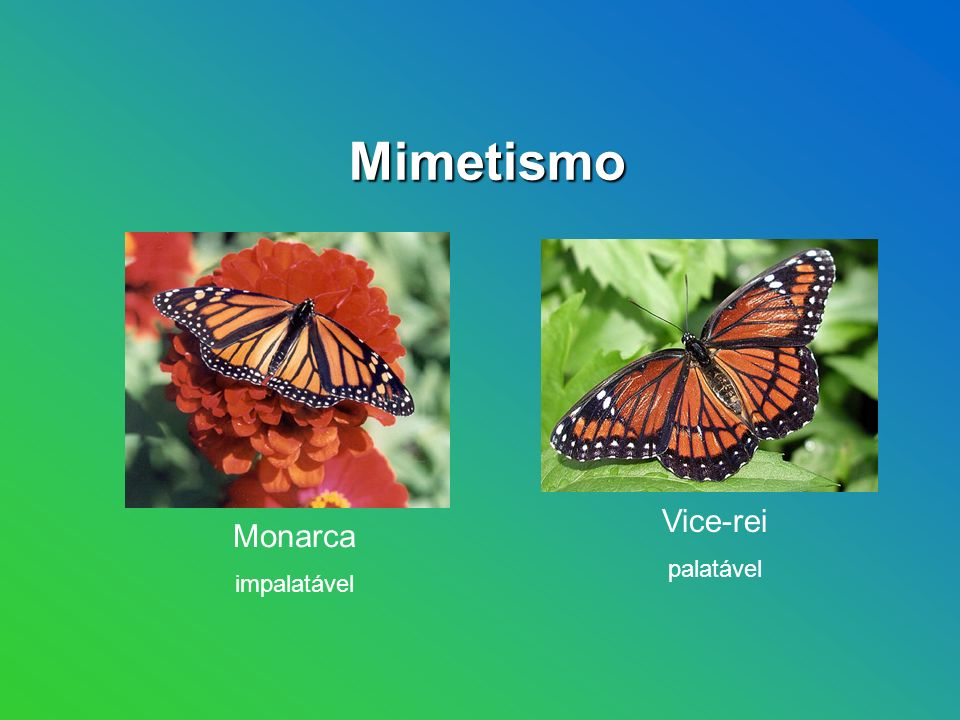 Mimetismo Coral verdadeira Vice-rei palatável Monarca impalatável