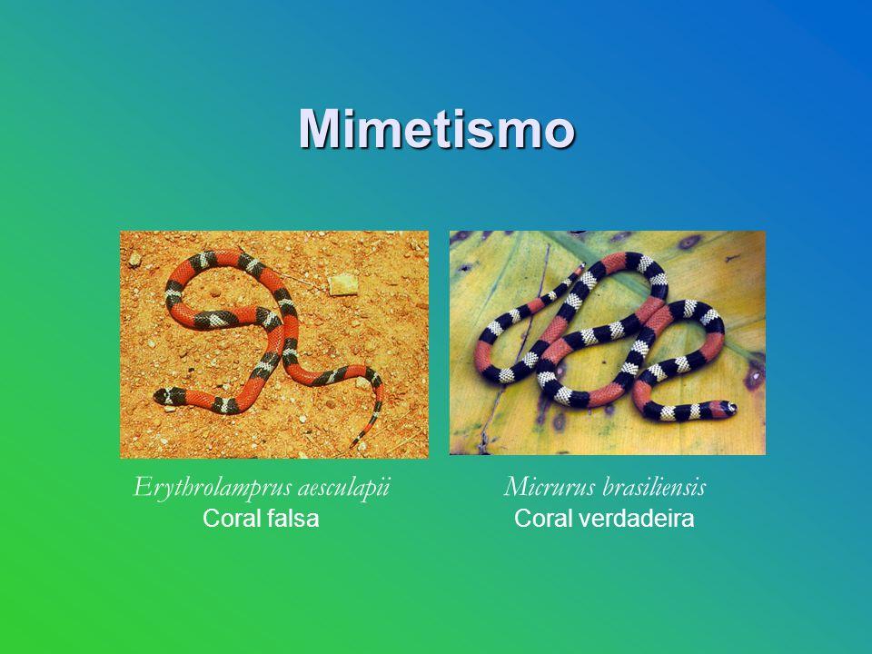 Mimetismo Erythrolamprus aesculapii Micrurus brasiliensis Coral falsa