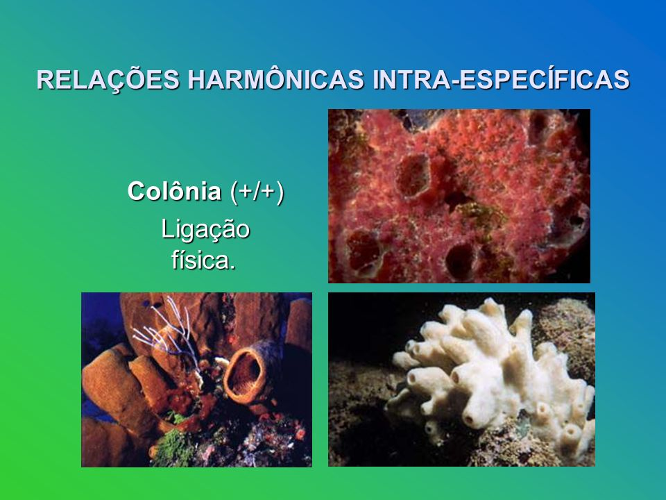 RELAÇÕES HARMÔNICAS INTRA-ESPECÍFICAS