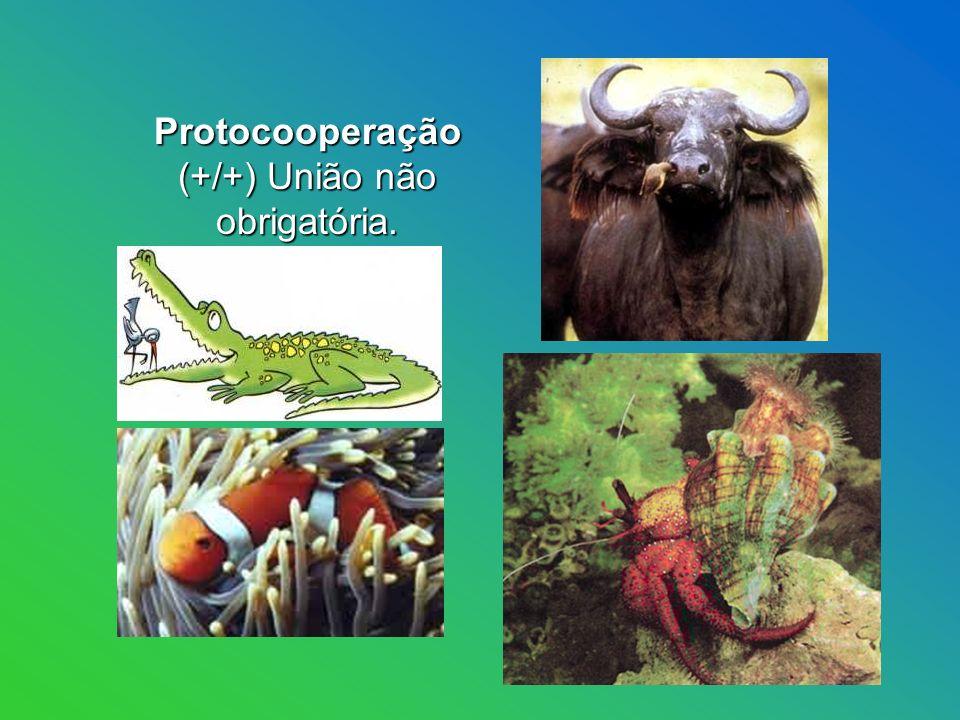 Protocooperação (+/+) União não obrigatória.