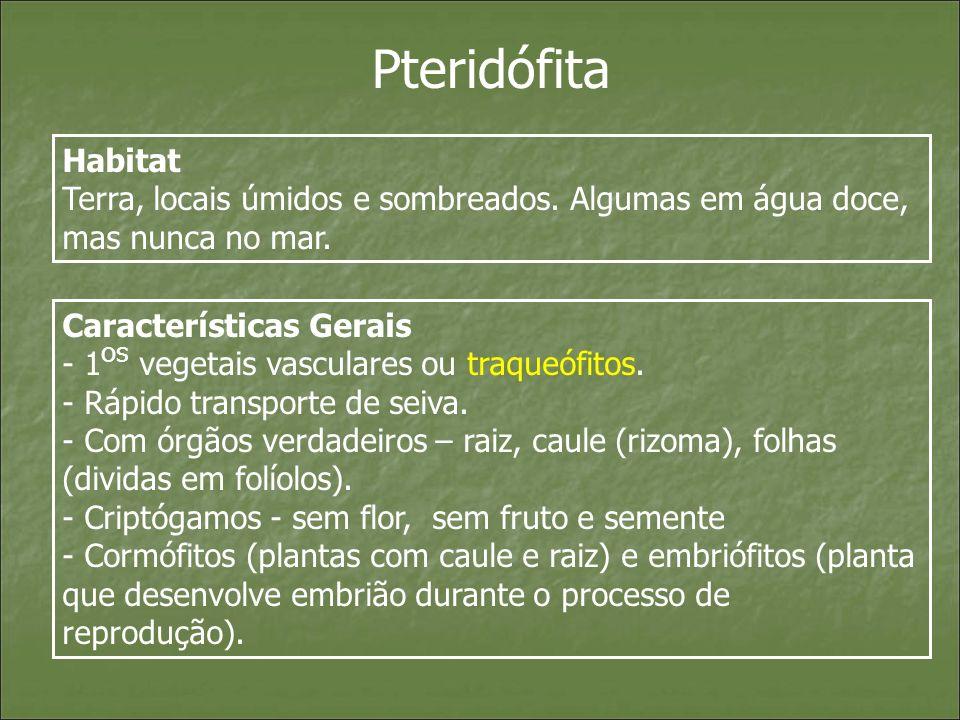 Pteridófita Habitat. Terra, locais úmidos e sombreados. Algumas em água doce, mas nunca no mar. Características Gerais.