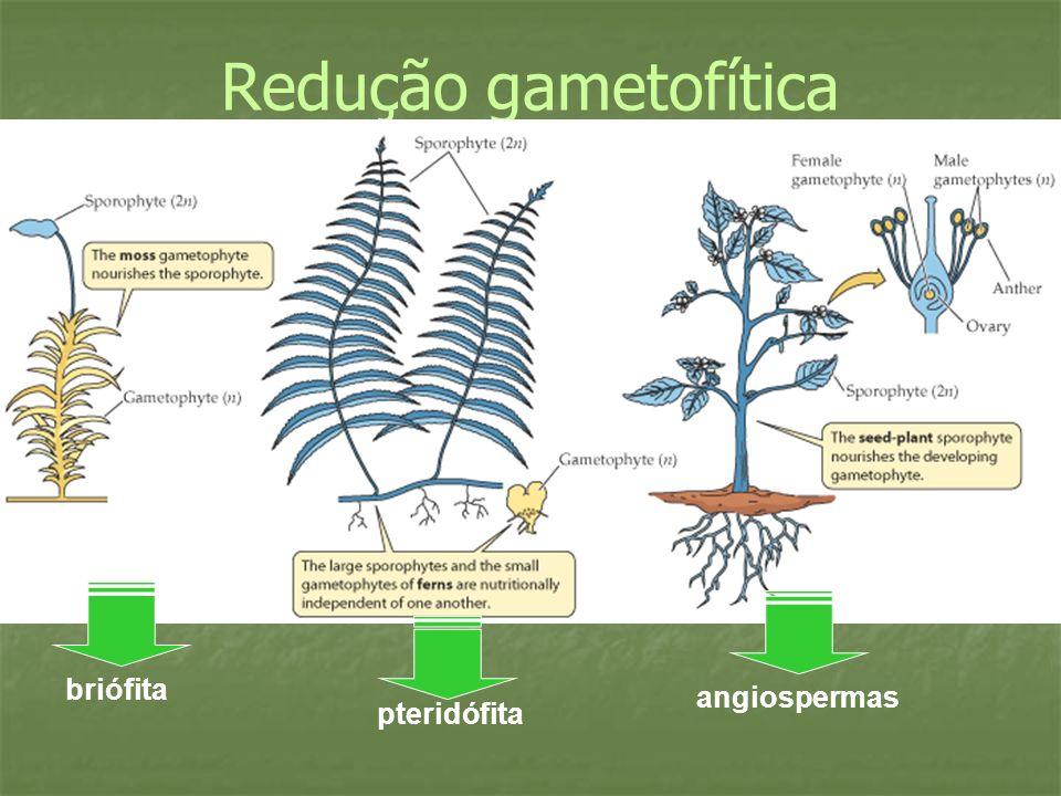 Redução gametofítica briófita angiospermas pteridófita