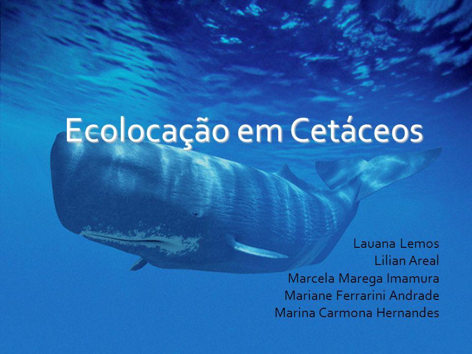 Ecolocação em Cetáceos