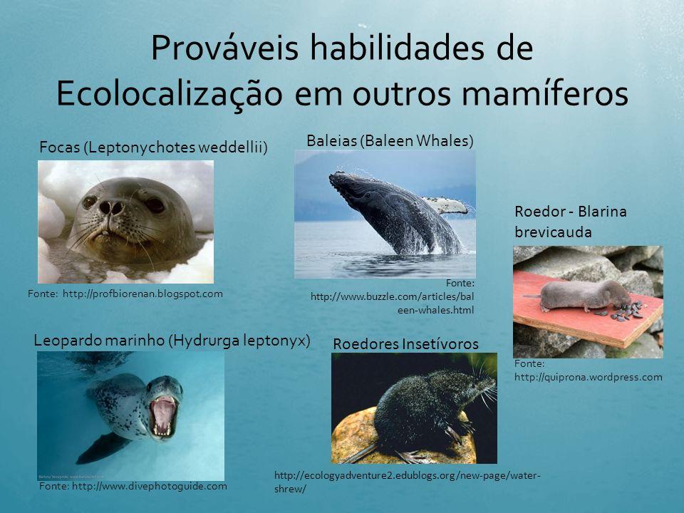 Prováveis habilidades de Ecolocalização em outros mamíferos