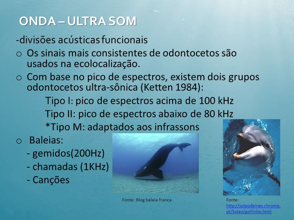 ONDA – ULTRA SOM -divisões acústicas funcionais