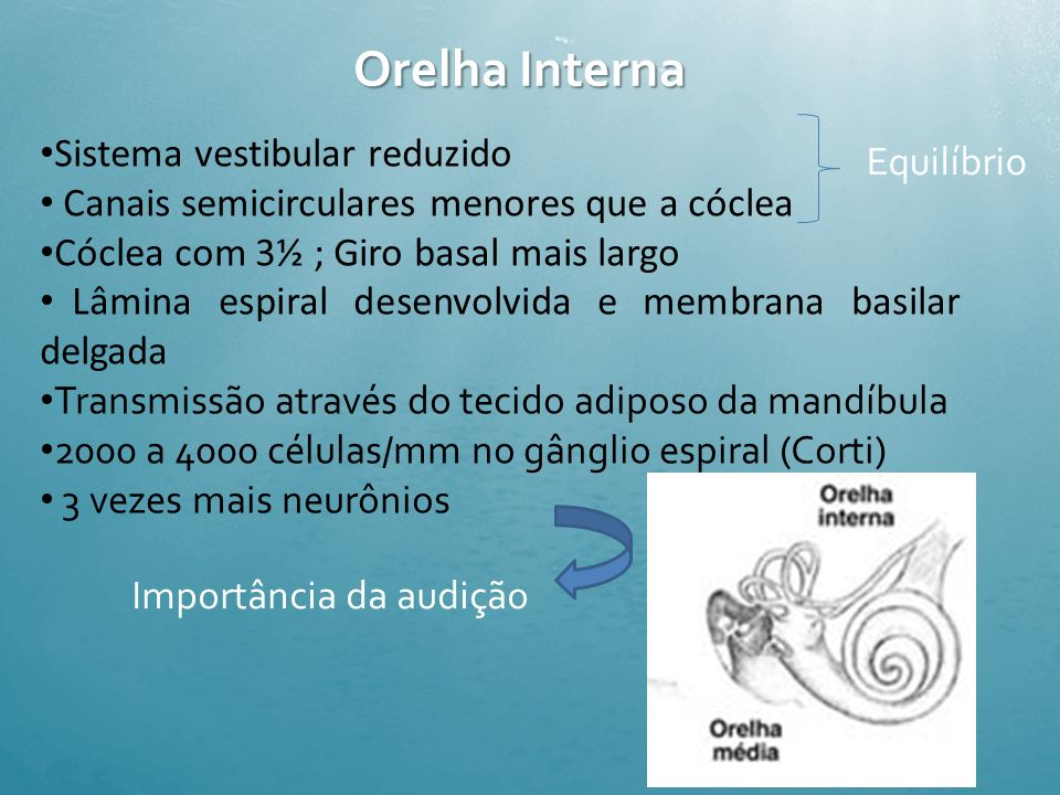 Orelha Interna Sistema vestibular reduzido Equilíbrio