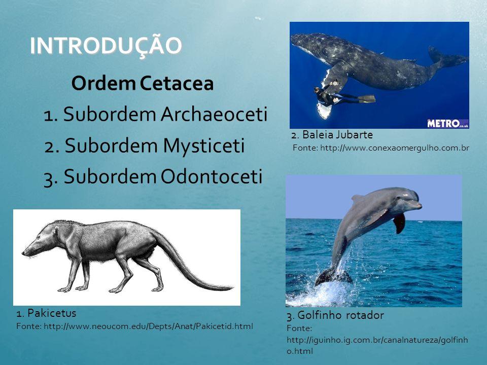 INTRODUÇÃO Ordem Cetacea 1. Subordem Archaeoceti 2. Subordem Mysticeti 3. Subordem Odontoceti 2. Baleia Jubarte.